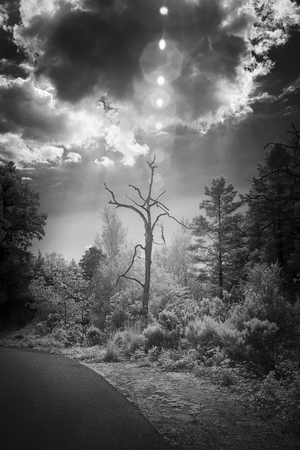 Dead tree illuminated by light beams filtered by clouds with flares. Used infrared filter. Added some digital noise.