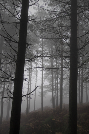 Foggy woods in the evening. Northern Portugal.