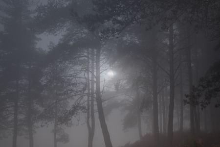 Full moon rising in a misty forest at dusk