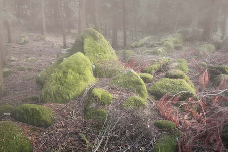 Deep foggy forest rocks covered with moss in the early morning light.