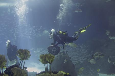 Biologe Aquarientaucher während der täglichen Wartung.