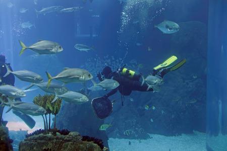 Biologe Aquarientaucher während der täglichen Wartung. Standard-Bild