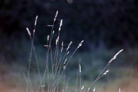 Glistening grass. Minimal composition. Last day rays of light.
