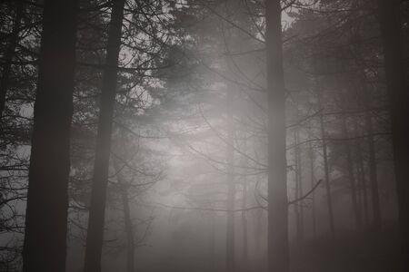 Late autumn foggy mysterious woods