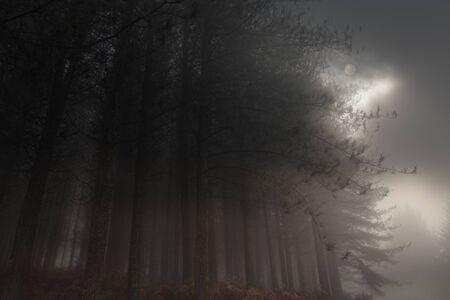 Mondaufgang über einem nebligen Wald am Abend