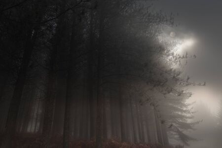 Moon rising over a foggy forest in the evening
