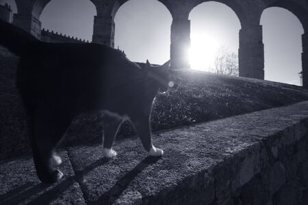 Mysterious cat from a medieval abbey in a full moon night