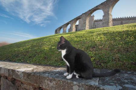 Stray cat, guardian of Santa Clara medieval abbey, north of Portugal