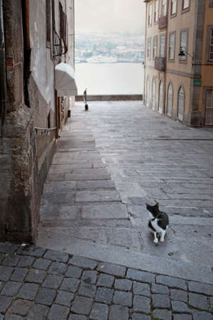 Cautious cat. With great attention to the dog that suddenly appeared at the bottom of an old street in Porto. Dawn light. Focus on the foreground.