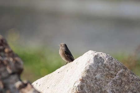 Beautiful small bird closeup. Northern Portugal. Archivio Fotografico