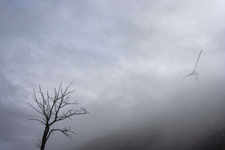 Bare tree and wind generator on the top of a misty and cloudy mountain