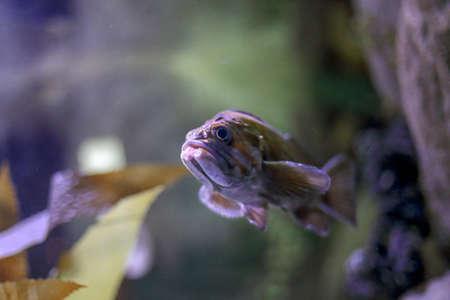 Soft backlit ocean fish. Aquarium photo.