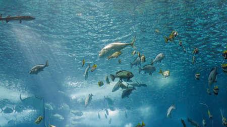 Beautiful and colorful tropical fishes. Aquarium photo.