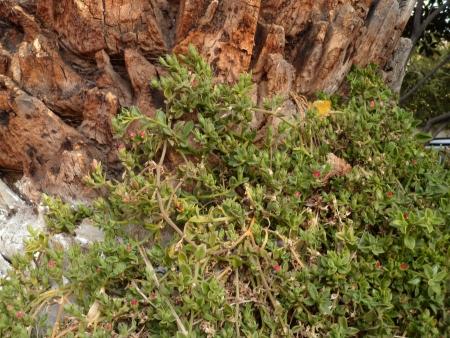 Plant on Palm Banco de Imagens