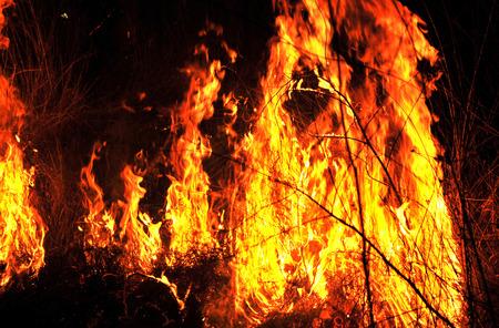 resplandor: Varios colores desierto feroz fuego delante de todos ellos, Novi Sad, Serbia