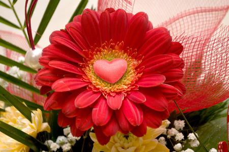 Red roses splendor of its beauty and freshness, Novi Sad, Serbia Stock Photo