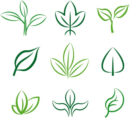 Green plants and leaves. Vector illustration