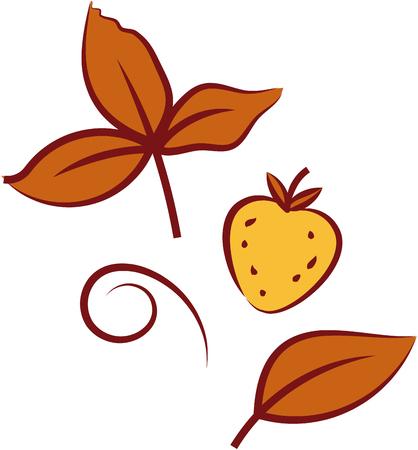 Wild strawberry. Vector illustration