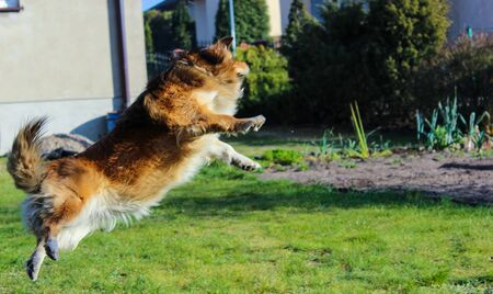 dog jumping into the garden