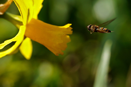 Fly landing on flower
