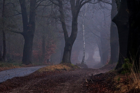 Misty road in the forest