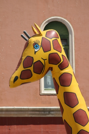 Yellow giraffe with brown spots in front of window photo