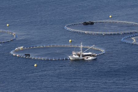 まぐろ養殖のクロアチアのアドリア海のケージ
