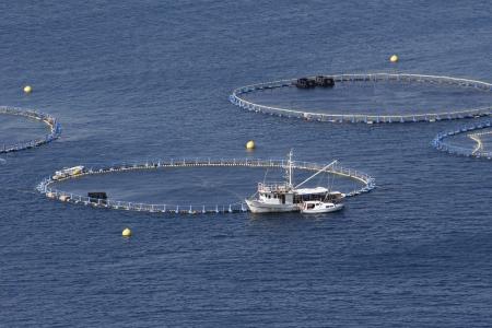 trawler: Cages for tuna farming in Adriatic sea in Croatia