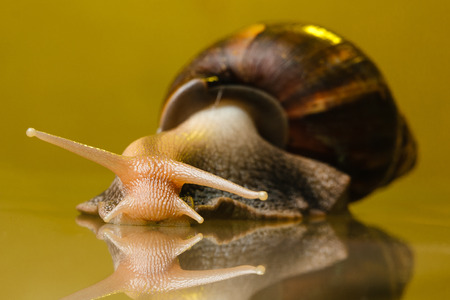 snail on the glass with yellow background