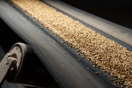 conveyor belt with barley at beer factory Imagens