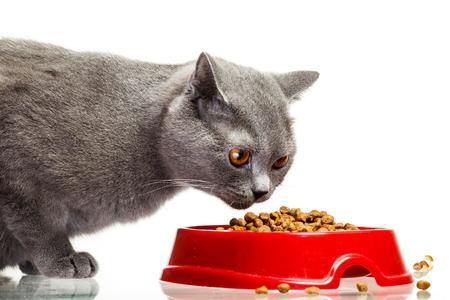 Graue Katze aus der Schüssel zu essen isoliert auf weißem Hintergrund