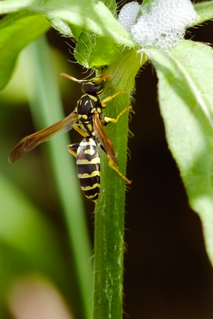 Wasp on the branch