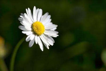 Ojo de buey margarita - Cierre