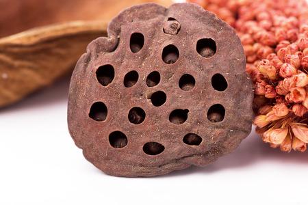 loto: Potpourri - close up on loto pod