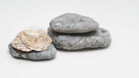 Seashells and stones on white background
