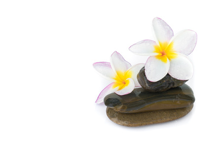 Plumeria flower on stone for spa relax on white background