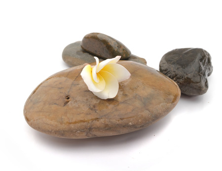 Plumeria flower on stone for spa relax, frangipani tropical flowers Stock Photo