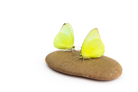 Yellow butterflys on stone with white background