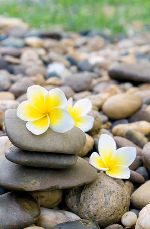 Plumeria flower on stone for spa relax Stock Photo