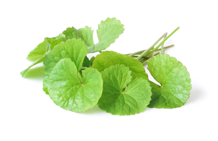 Closeup leaf of Gotu kola, Asiatic pennywort, Indian pennywort on white background, herb and medical concept, selective focus Stock Photo