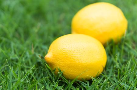 Closeup fresh lemon fruit on green grass background, selective focus Stock Photo