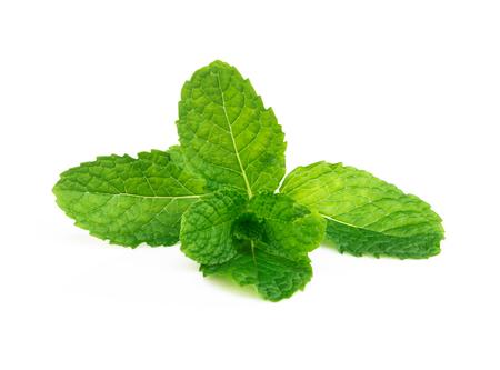 Verse groene muntblaadjes geïsoleerd op een witte achtergrond, kruid en medische concept Stockfoto