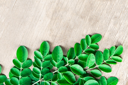 Closeup top view moringa leaves branch, herb and medical concept