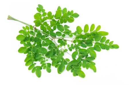 Closeup young moringa leaves branch, herb and medical concept Standard-Bild