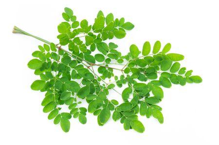 Closeup young moringa leaves branch, herb and medical concept Stock fotó