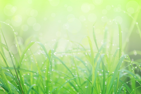 brigth: water drop on the green grass and background