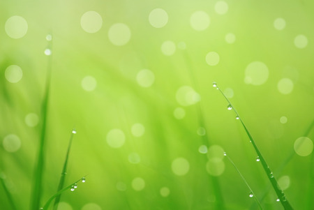brigth: natural   background with grass and bokeh Stock Photo