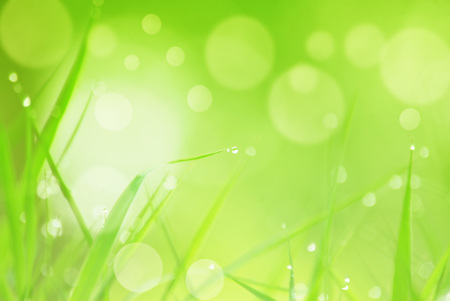 patternbackground: natural   background with grass and bokeh Stock Photo