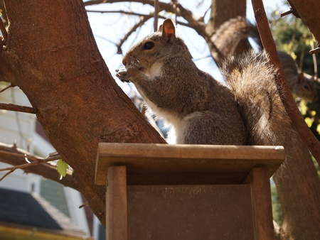 bird feeder: Squirrel eating on top of bird feeder