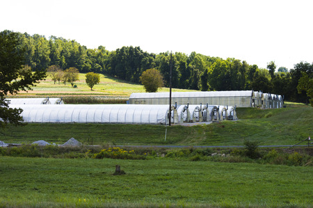 rolling hills: Row of green houses in the rolling hills of Pennsylvania Stock Photo